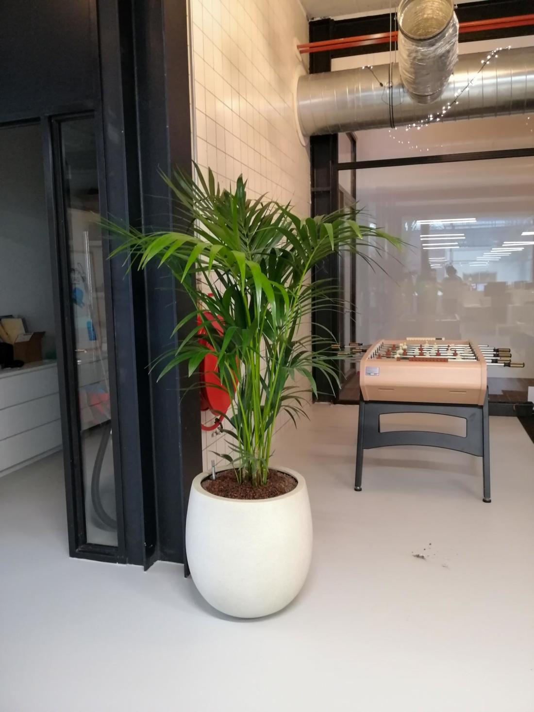 Pot-met-grote-bladplant-1100x1467.jpg