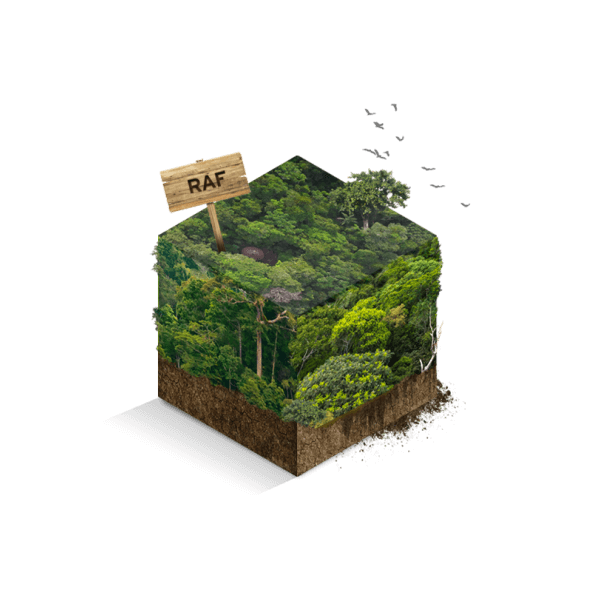 M2 regenwoud
