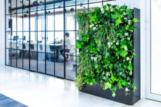 Plantenwand roomdivider op kantoor