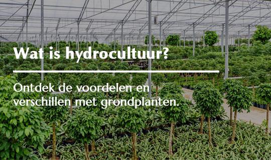 De voordelen van hydrocultuur planten