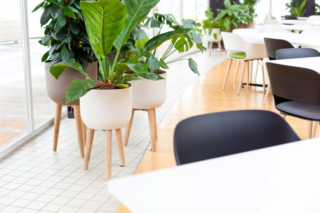 Urban-jugle-bedrijfsrestaurant-4-1100x733.jpg