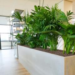 Werkplekafscheiding planten urban jungle