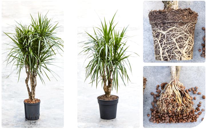 Het verschil van grondplant en hydroplant