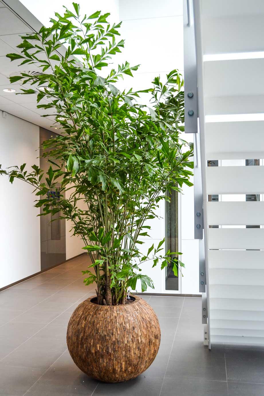 Voorbeeld-interieurbeplanting.jpg