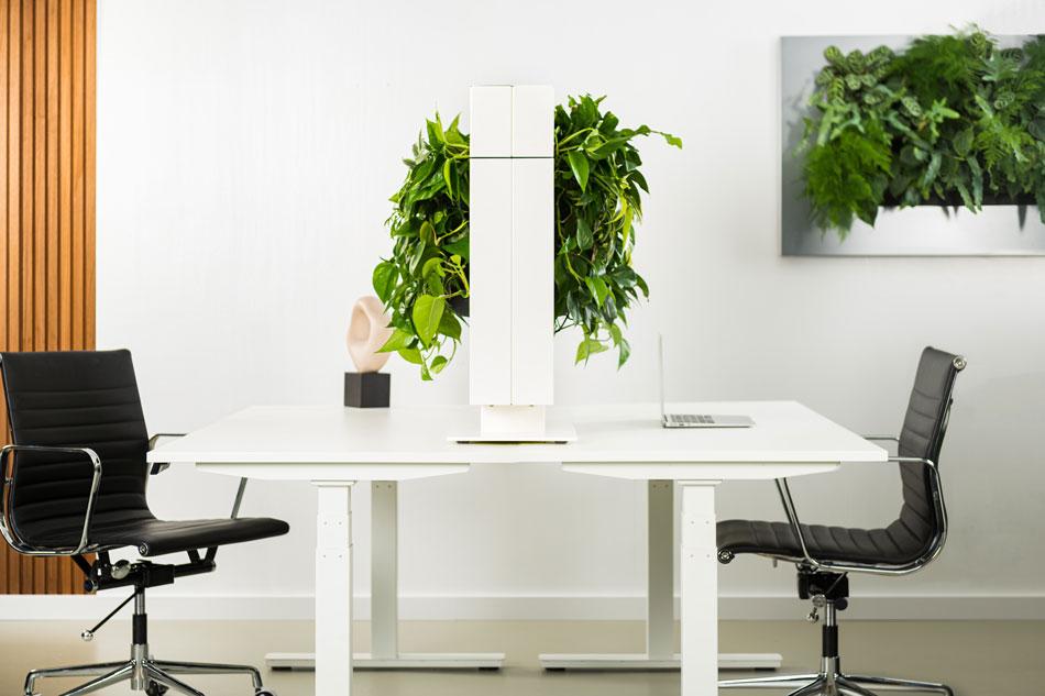 Roomdivider beplanting onderhoudsarm
