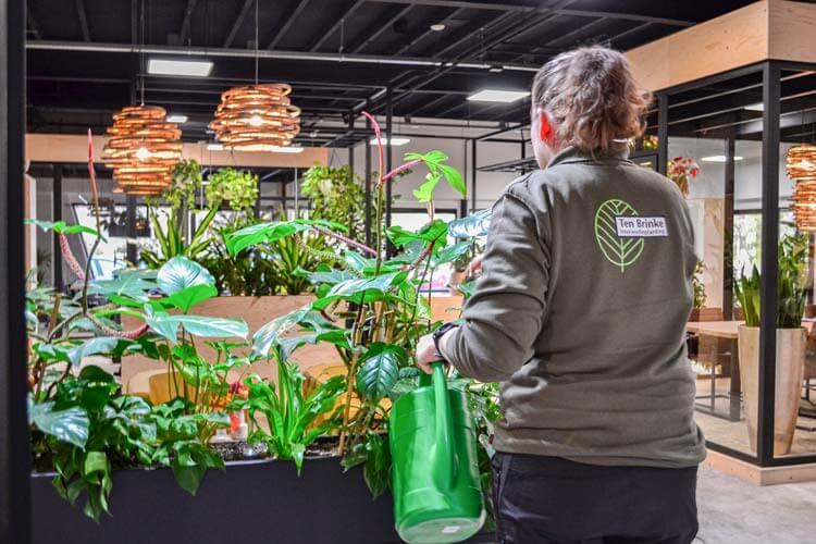 Verzorging van planten