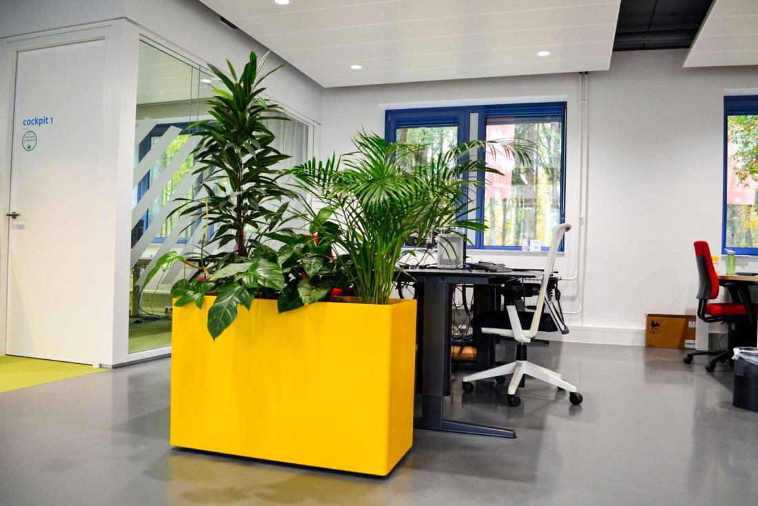 noc-nsf-gele-plantenbak-1100x734.jpg